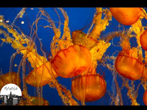 jellyfish orange